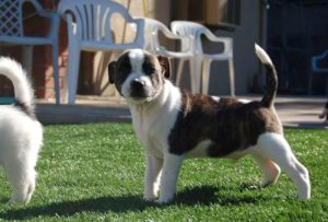 Artificial Pet Turf Dallas